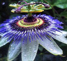 Power Of Purple - Calendar  by naturelover