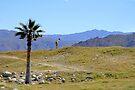 African Savanna in California by Jo Nijenhuis