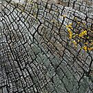 Cracked Wood by Ed Stone