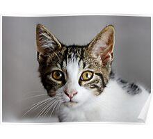 Millie as a Kitten Poster