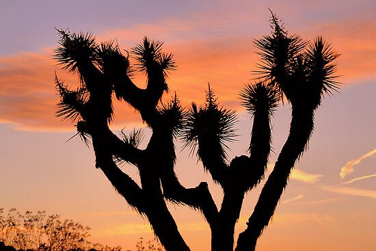 Joshua Tree Sunset by Jo Nijenhuis
