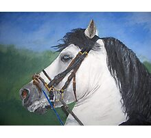 horse painting Photographic Print
