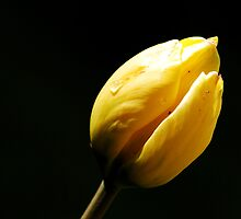My spring dream  by natureloving