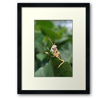DON'T TOUCH MY LEAF. Framed Print