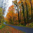 Autumn colours  by natureloving