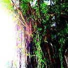 Solar Tree by meadaura
