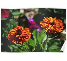 Golden Beauties...winter flower series Poster