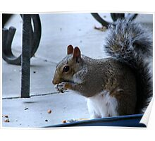 Yummy  these nuts are good Poster