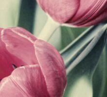 Twin Tulips in Pastel Pink Sticker