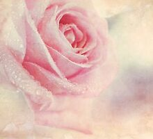 Antique Rose by micklyn