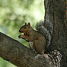 I Found My Nuts by BigD