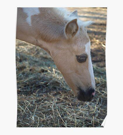 Pony Make-up Poster