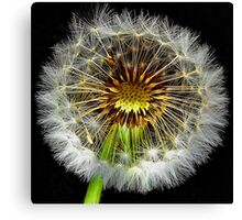 Dandelion  light Canvas Print