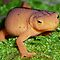 Amphibians with Tails -  (Amphibians & Reptiles Category)