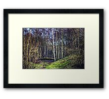 Woodland Spaces Framed Print