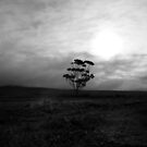 tree by justinGC