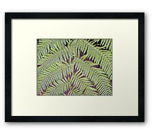Lacy Tree Framed Print