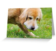Fetch Greeting Card