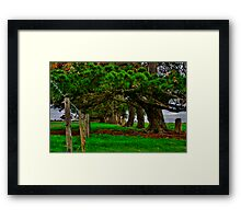 """Along the Fenceline"" Framed Print"