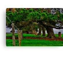 """Along the Fenceline"" Canvas Print"