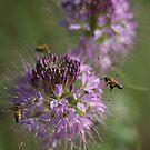 Bizzy Bees by David  Postgate