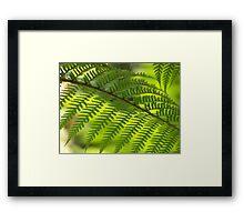 Mariana Island Fern Framed Print