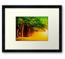 The Tranquil Path Framed Print