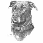 chocolate labrador drawing by Mike Theuer