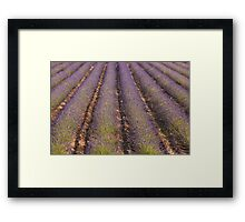 Provencal Lavender Framed Print
