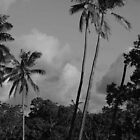 Coconut Palms  by Marion Ardana