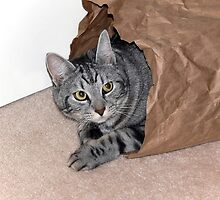 Brown bagging a cat? by Sandra Chung