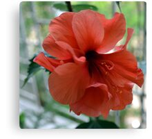 Red Flower Hibiscus Canvas Print