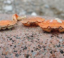 Crabs by franceslewis
