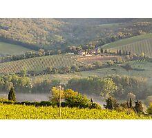 Chianti Vineyards Photographic Print
