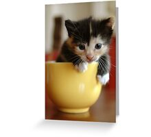 macchiato in tazza (Meg in the cup) Greeting Card