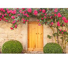 French Rose Photographic Print