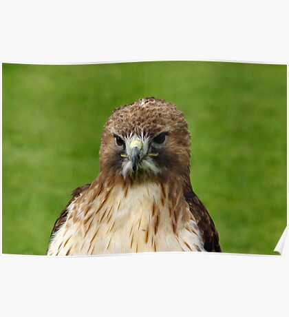 Bird of Prey Poster