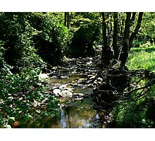 The Beck Photographic Print