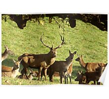 They are all mine - Red Deer. Poster