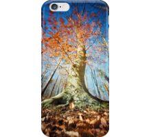 Beech iPhone Case/Skin