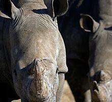 How ya lookin at? by Wild at Heart Namibia