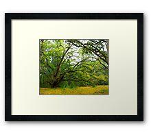 The Golden Rain Tree © Framed Print