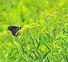 Monarch In The Meadow by SRowe Art