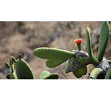 cactus  blooming in the desert Photographic Print