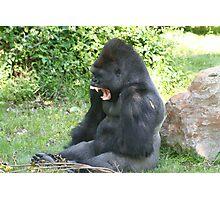 Gorilla Fangs Photographic Print