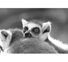 Lemur Alert Photographic Print