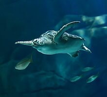 Green Sea Turtle Painting by Art-by-Aelia