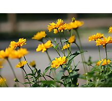 Yellow Flowers Full Color Photographic Print