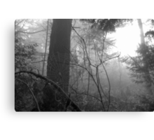 The Woods and a Web Canvas Print