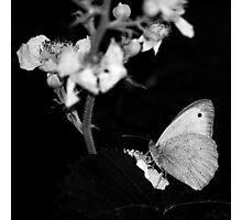 - Capture - Photographic Print
